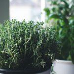 Zakładanie zielnika w kuchni – porady i inspiracje